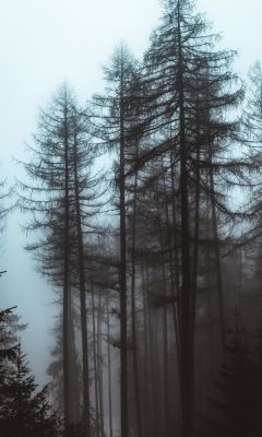 trees during day wallpaper