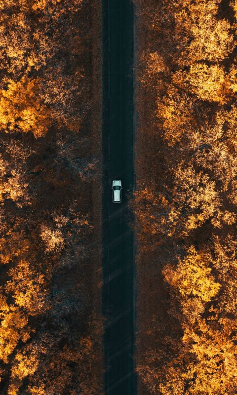 aerial photography of car in forest wallpaper