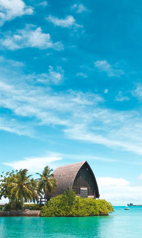 brown hut near coconut palm trees under blue sky wallpaper