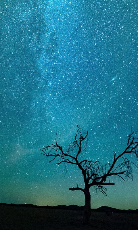 bare tree under starry night wallpaper
