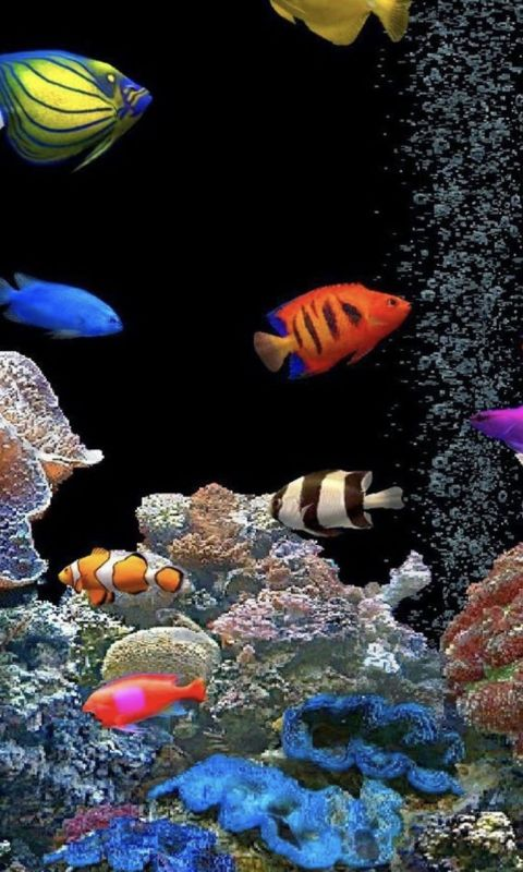 Aquarium tank colorful wallpaper