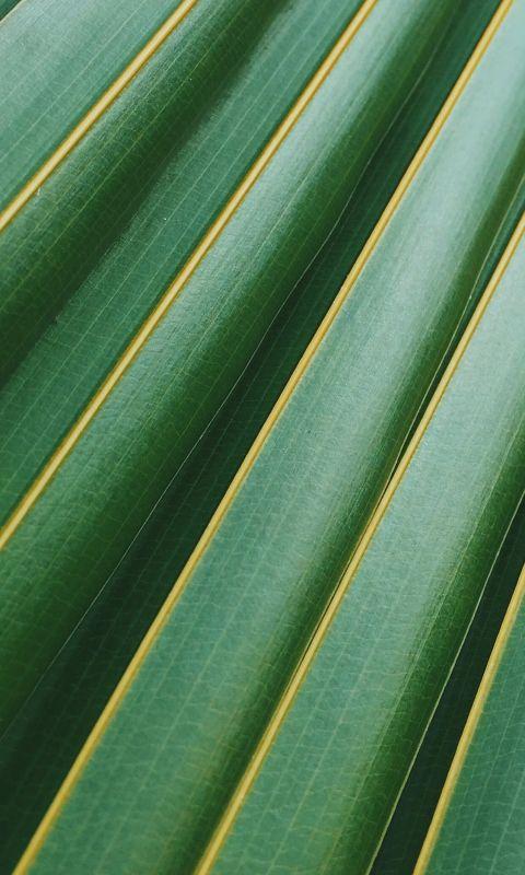 coconut leaf wallpaper