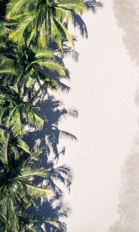 coconut palm trees wallpaper
