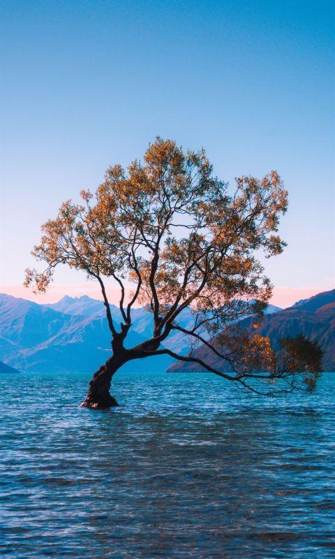 brown leaf tree at water during daytime wallpaper