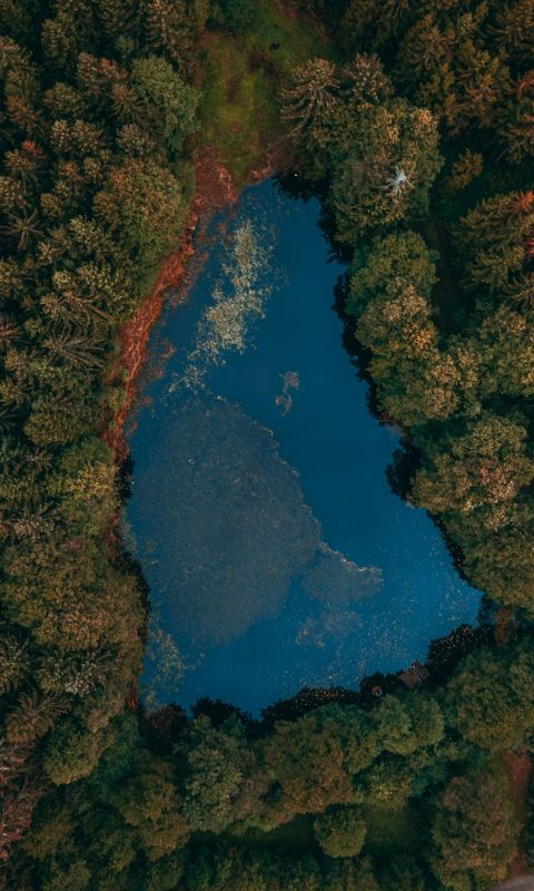 aerial view of lake surrounded by trees wallpaper
