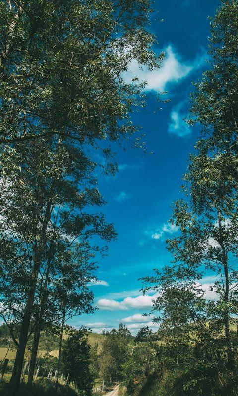 Summer Road Trees Sky Sunny Summer Vibes wallpaper