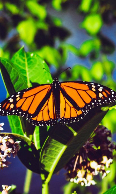 Aesthetic Butterfly Cave wallpaper