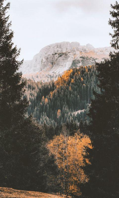 green trees near mountain during daytime wallpaper