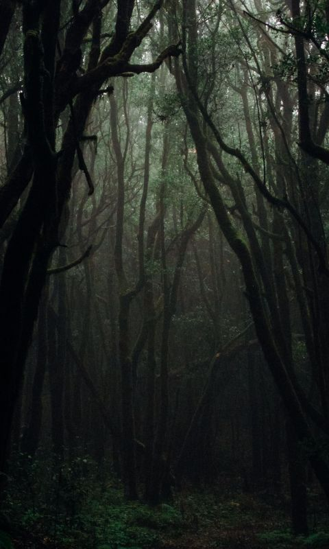 forest during daytime wallpaper